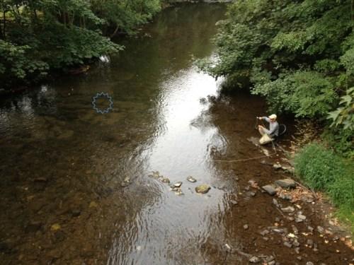 Forelle Äsche Fliegenfischen Urft Brückencast Veit