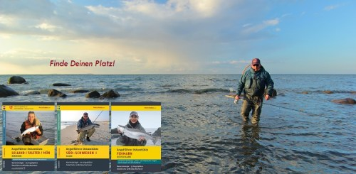 Forelle Äsche Meerforelle Northguiding 2