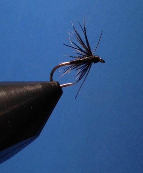 Stewart's Spider – Hechel: Star