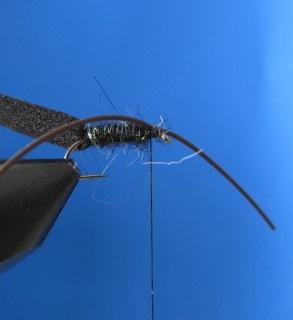 Fliegenbinden Käfer Foam Beetle