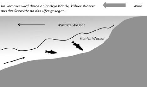 Ablandiger Wind