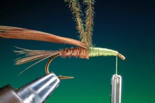 BOC PTN Pheasant Tail 14