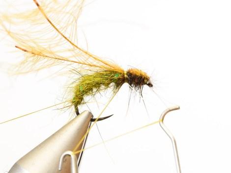 Rhyacophila_Caddis_Sedge_Pupa13