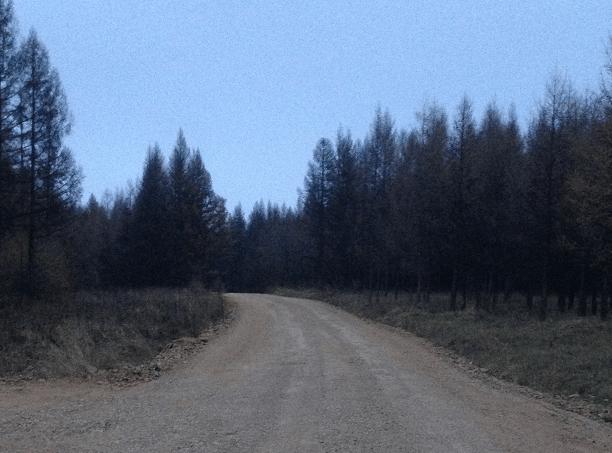 gęstość sieci dróg leśnych