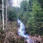 Strumyki i rowy - niedostrzegana woda w lesie