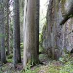 Leśne prawo własności w Szwecji.