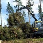 Nawożenie lasu bio popiołem.