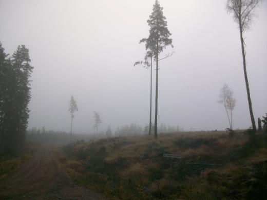 las w Szwecji
