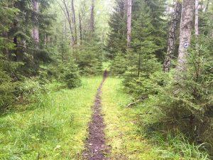 Fast anställning i polska statliga skogar Lasy Państwowe