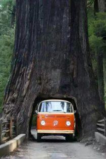 Kreatywność leśnika.