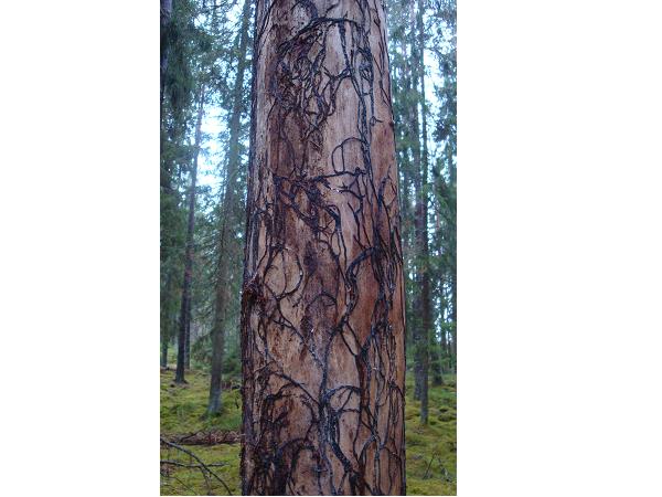 researchers explored mycorhiza