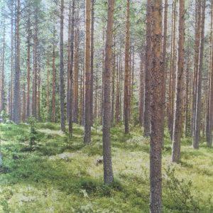 Trzebieże nie muszą być oczywiste w lesie.
