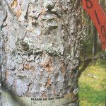 Fińsko-szwedzkie pomiary przyrostu drzew.