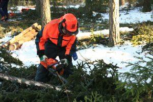 Robotnicy leśni jako gastarbeiterzy.
