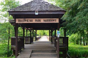 Motywacje leśników a Białowieski Park Narodowy,