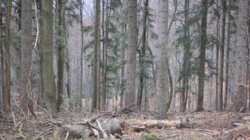 Antropologiczna diagnoza leśnika Lasów Państwowych.