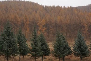 leśnictwo pełne jest inwestycji