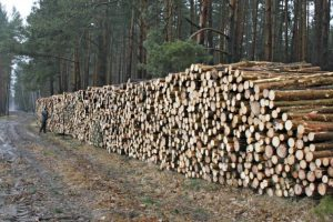 Co mają Polacy z Lasów Państwowych?