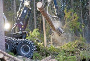 Dyskusje o lesie.