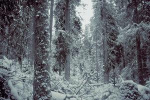 Jaki powinien być las?