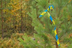 Szwedzkie czyszczenia lasu