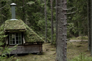 Las szwedzki, prywatny i pożytek z niego.