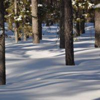 Szwedzko-finskie analizy rynku leśno-drzewnego