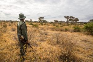 Strażnicy parków narodowych