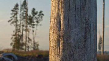Certyfikaty leśne