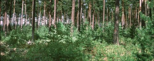 Hyggesfritt skogsbruk