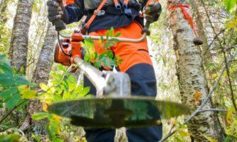 Robotnicy leśni