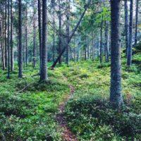 lasy pobliskie