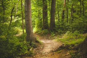 Lasy prywatne