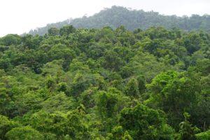 Lasy w Australii.