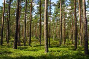 Mój las