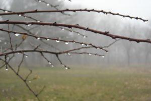 Dziewięć łez mojego lasu