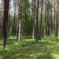 Lasy Państwowe