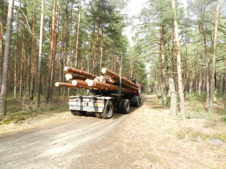 ustawy o lasach