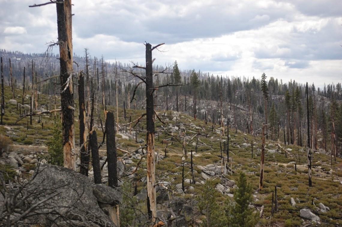 Mitos y verdades sobre los incendios forestales