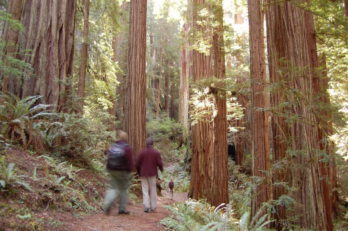 Los bosques de secuoyas de California