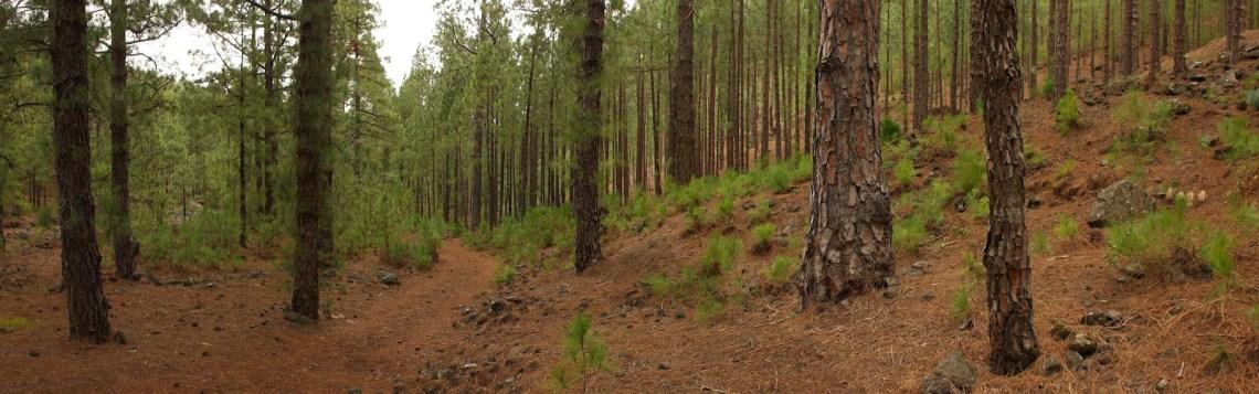 ¿El árbol perfecto? Siga buscando…