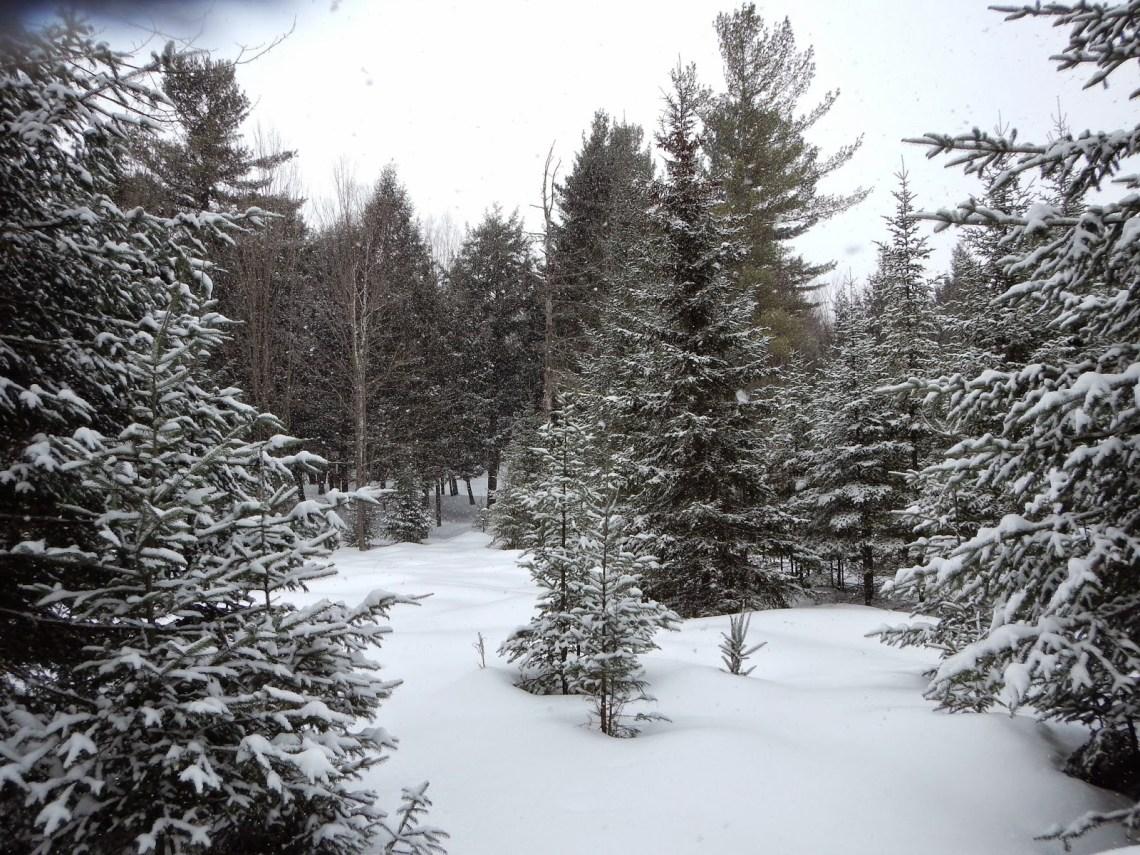 ¿Cómo sobreviven los árboles al invierno?