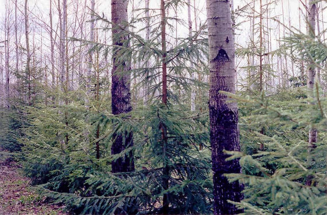 'Reinventando las plantaciones forestales': primera colaboración en Principia