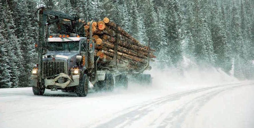 El cambio climático y los trabajos forestales: el deshielo