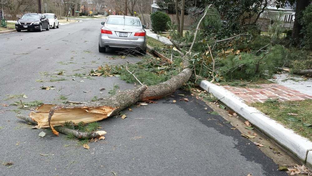This branch took down a power line on the 4500 block of 29th Street NW.