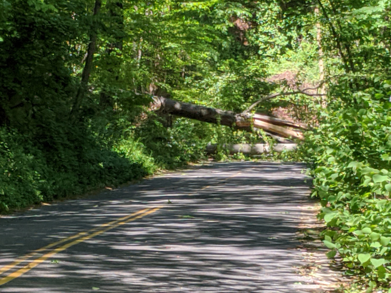 Trees down on Broad Branch Road
