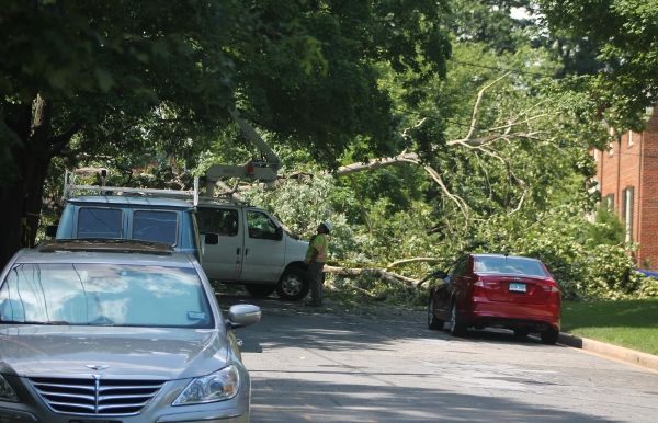 One of three trees down on the 4500 block of 29th Street on Saturday, June 29th. (photo by Alex Ray)