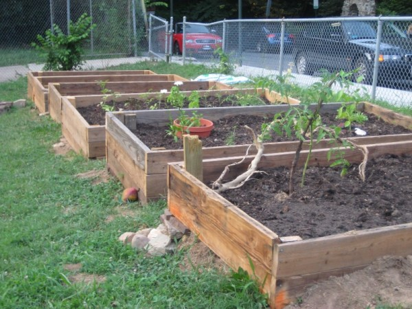 Raised beds at the Mt. Pleasant Community garden were built from donated lumber.