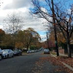DC leaf collection has begun. Someone tell the trees?