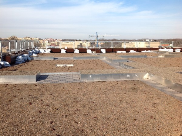 Looking toward the north: The green roof, surrounded by porous walkways, raised beds and more planters. (Photo courtesy of CAUSES/UDC)